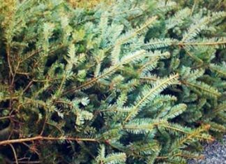 Richmond officials offer residents options for Christmas tree disposal