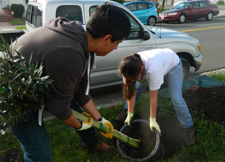 Richmond residents encouraged to adopt trees as part of mission to green the city
