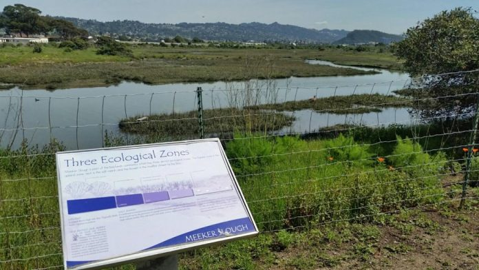 Cleanup of Meeker Slough in Marina Bay called community effort