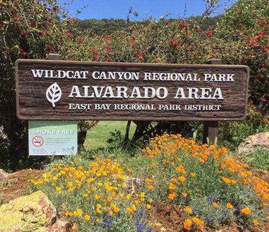 Wildcat Canyon among parks closed due to high winds