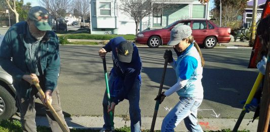 Richmond Trees recognized for caring for city's urban forest