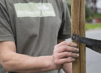 Volunteers sought for Richmond tree planting event Dec. 10