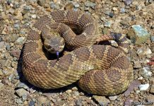 East Bay Regional Park District warns public about rattlesnake season
