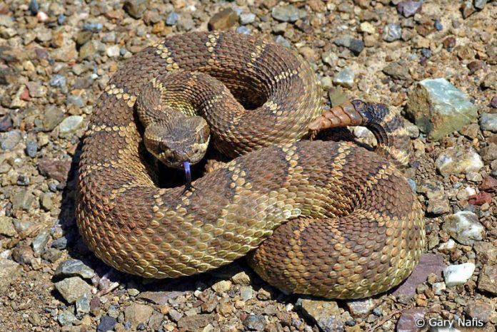 East Bay Regional Park District warns public about rattlesnake season