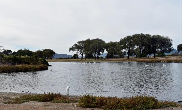 East Bay park trails remain open during coronavirus lockdown