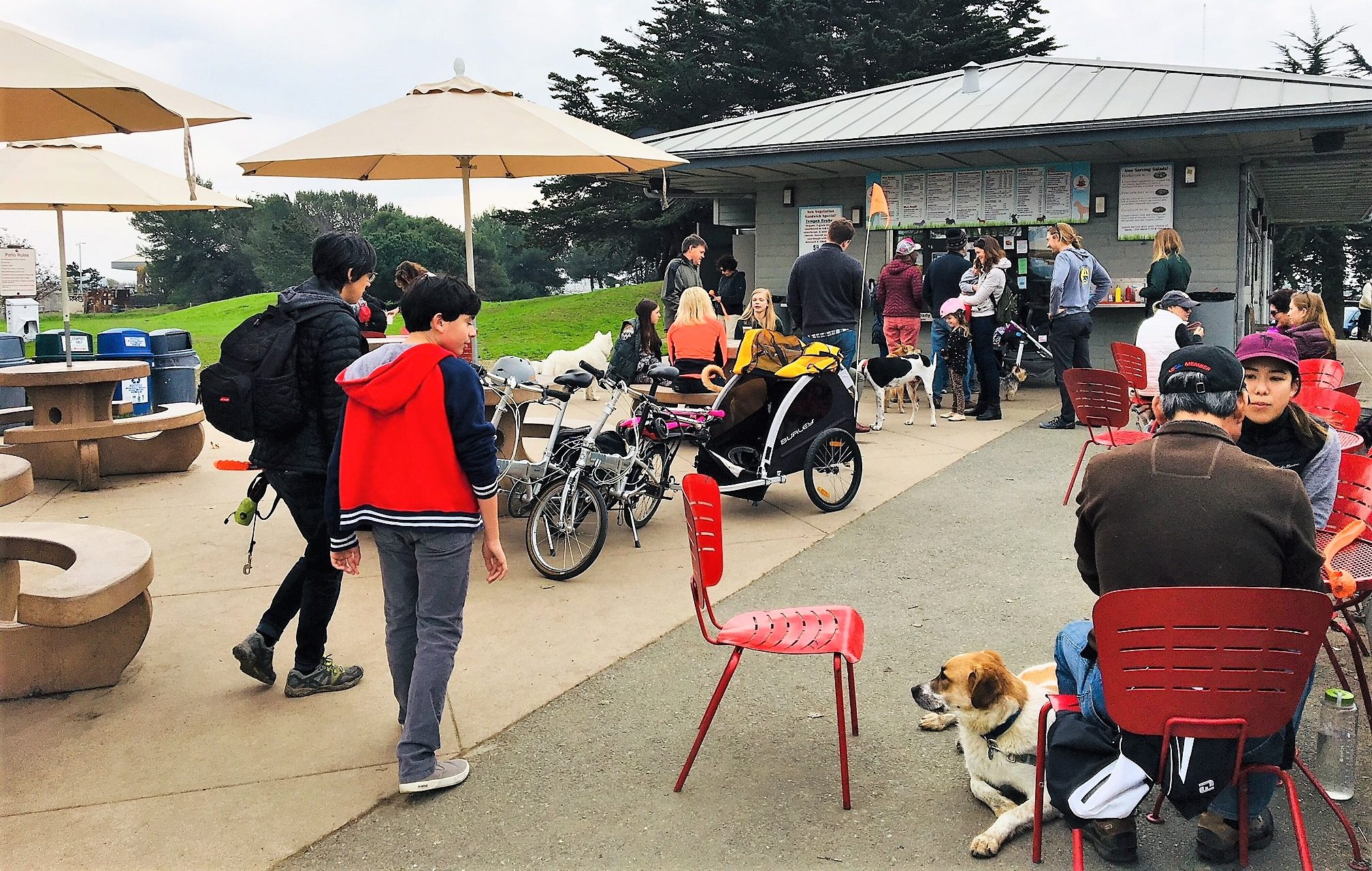 Dog-friendly Richmond: Places to pal around with your pooch