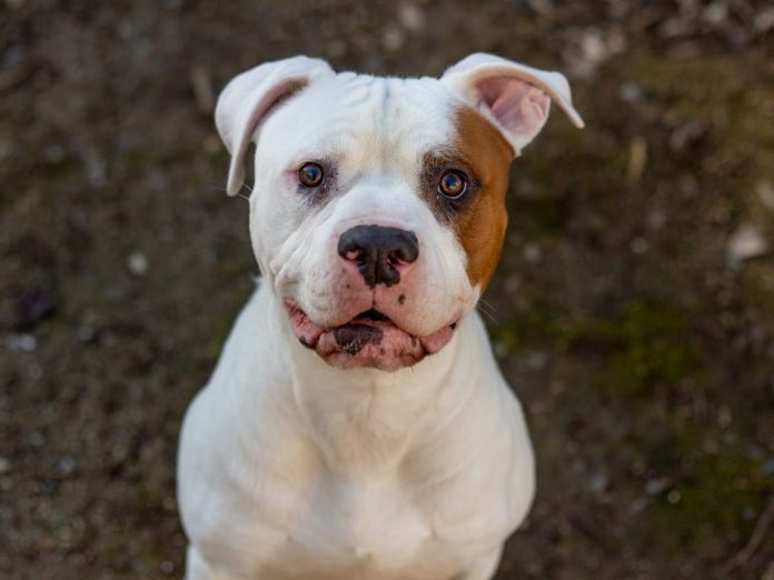 Contra Costa Animal Services offering 'Big Love' adoptions discount