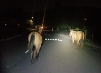 RPD gets neighbor's help with roaming horses