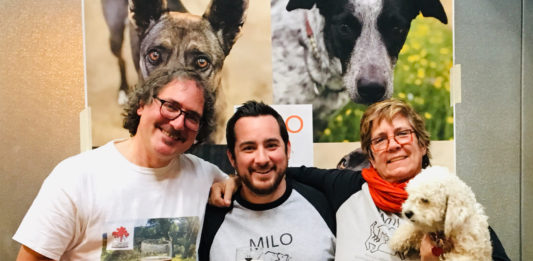 Paws & Pints gives rescue dogs new leash on life