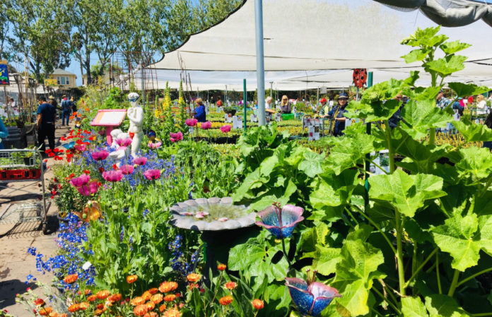 Annie's Annuals & Perennials a safe, springtime escape