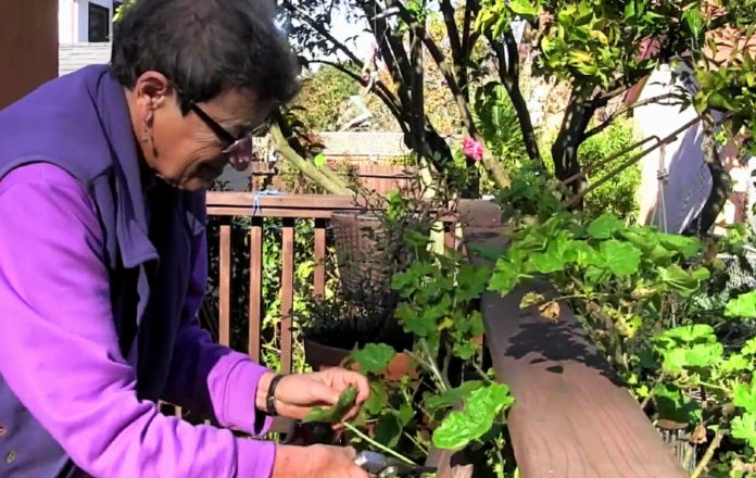 East Bay nonprofit checking in on quarantined seniors