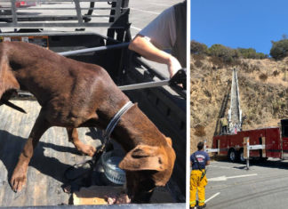 Richmond firefighters rescue dog stranded on 100-foot cliff