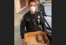 San Pablo police bust pet store burglar; recover turtles, chicks and exotic bird