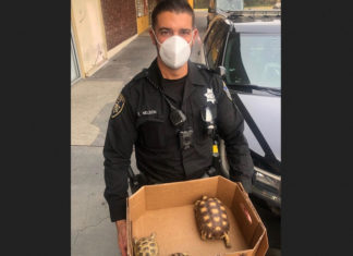 San Pablo police bust pet store burglar; recover turtles, chicks and exotic bird
