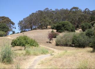 El Cerrito: Hillside Nature Area fire investigated as possible arson