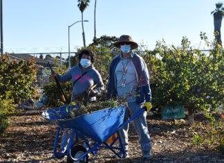 Teacher, 79, maintains Kennedy High gardens amid pandemic
