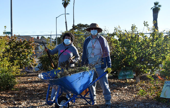 Teacher, 79, maintains Kennedy High gardens amid pandemic