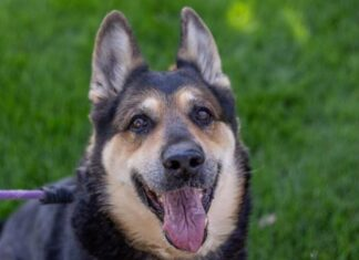 Contra Costa Animal Services waiving adoption fees through Sept. 19